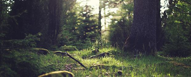 peisaj_în_pădure