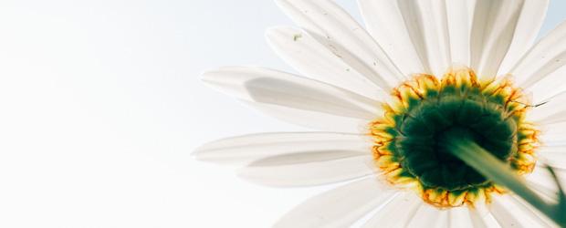 floare_albă